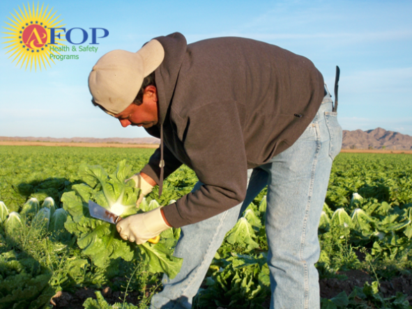 Farmworkers use many sharp and hazardous tools to do their work