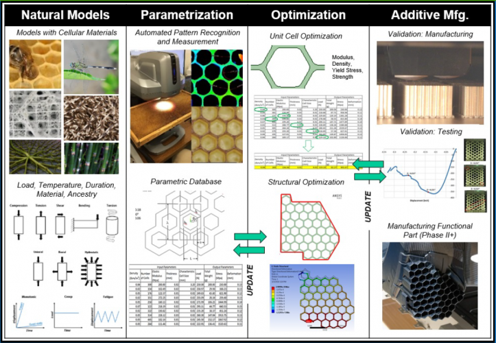 Summary of Cellular Geometries in Nature and 3D Printing